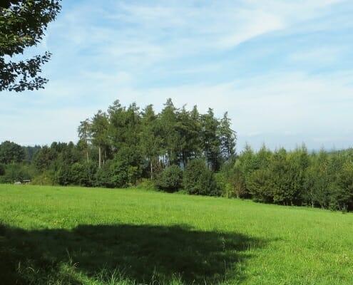 Blick vom Grundstück Herrlicher Blick auf Bäume, wiesen und Sträucher eines Grundstücks der Fa. Cobau.